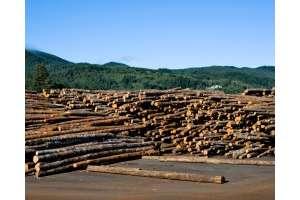 俄罗斯木材总储量达831亿立方米