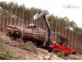 木材专用装卸车工作视频表演