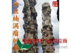 中鹏木艺 金丝楠满瘤树根楠木原木材料