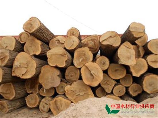 名贵木材树种介绍_资讯