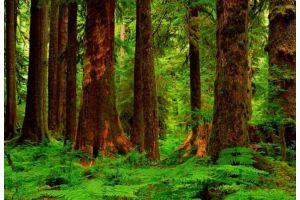 世界各国木材概况一览