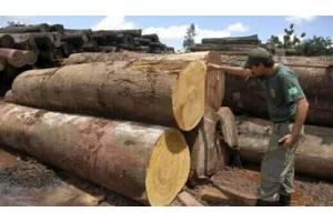 揭秘木材经营者的几种骗人伎俩