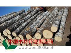 优质俄罗斯桦木原木批发