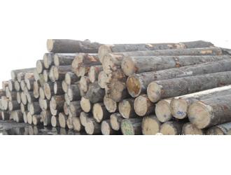 木材产地及原料木种详解