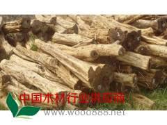低价供应原木---红木非洲紫檀木
