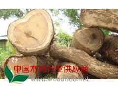 低价供应缅甸柚木原木