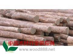 低价供应缅甸进口香樟木原木