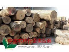 长期批发 欧洲白蜡木原木板材 不易劈裂餐椅白蜡原木