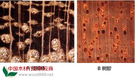 木知识:木材的管孔