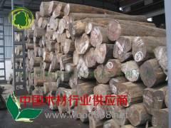 供应正宗缅甸柚木原材/原木 直径40-1米以上