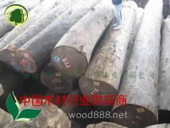 供应非洲柚木原材/原木60-100直径
