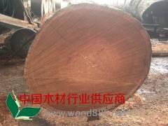 红柳桉原木新货供应(直径60-1.3米)