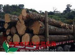 提单--哥斯达黎加柏木原木