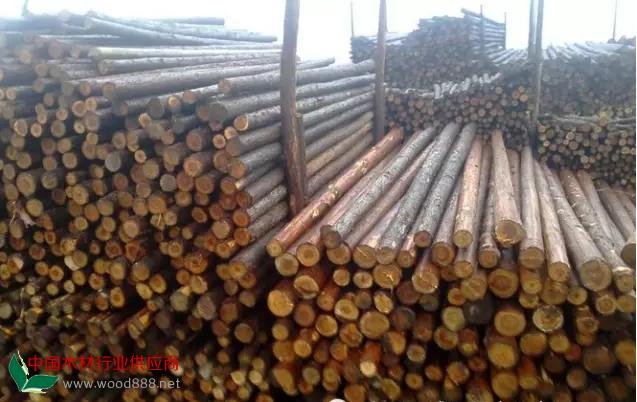 非洲木材在中国木材市场的进口和批发商渠道揭秘