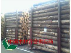 优质杉木原木 杉A材直 杉木长期大量批发
