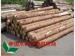 厂家直销 杉A材直2 杉木原木长期大量供应