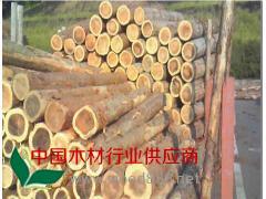 优质杉木原木 杉B材小曲3 长期大量批发