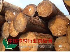 供应国内铁杉原木