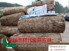 供应缅甸金丝楠木原木