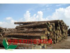供应缅甸柚木原木