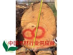 香柏木原木