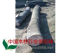 厂家直销 楸木 桐木原木 价格优惠 质量保证