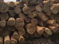 佛山市顺德区木然木业有限公司-阿根廷绿檀