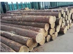 俄罗斯白松原木