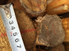欧洲榉木板材、白腊板材 、原木  ,红橡、白橡板材、原木,榉木鞋材、非洲加篷红花梨等等