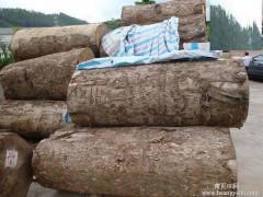 出售缅甸金丝楠木原木