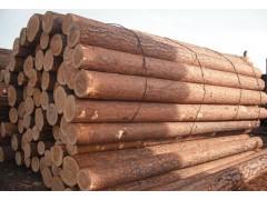 出售俄罗斯樟子松原木