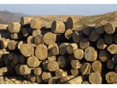 出售俄罗斯桦木原木