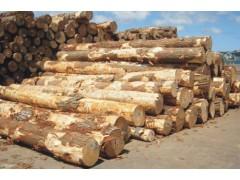 新西兰辐射松原木