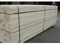 利津县王庄沙区林场木材战略储备基地建设项目公开招标公告