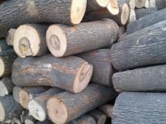 出售进口缅甸进口香樟木