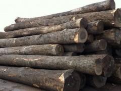 出售进口俄罗斯水曲柳原木