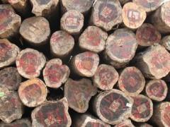 出售进口红酸枝原木铁木豆,阔变豆,阔扁豆木料