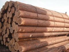 俄罗斯樟子松原木 进口无节樟子松实木 樟松实木用料批发
