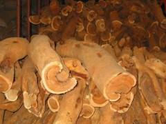 出售进口印度老山檀香 印度迈索尔老山檀香木原木 20-90cm