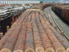 出售进口木材加工 进口木材 花旗松原木 建筑木材批发 辐射松