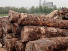 出售进口莫桑比克高棉花梨原木