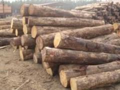 出售进口销售大口径辐射松原木 澳松原木 寿材原木批发