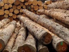 批发加拿大 铁杉原木 大口径原木 古建筑木材 港口直销售