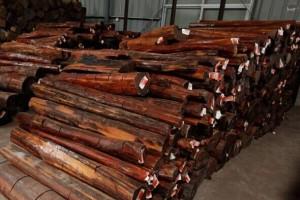 二连口岸木材进口前5个月呈增长态势
