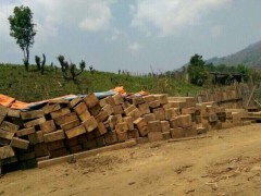 越南进口香柏木原木批发