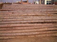 供应松木桩,松木方,松木板,打桩木,井下防坍塌支撑木
