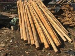 优质【与农户直接对接】大量供应各类规格优质杉木-大量批发