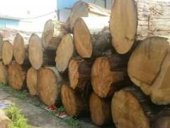 西藏柏木70一1米2每方13000元每立方
