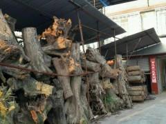 金丝楠树头
