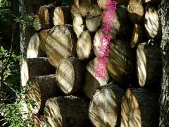 优质黑松原木批发